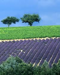 Que ma joie demeure en Provence